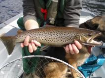 Nice brownie from Loch Eck 2012