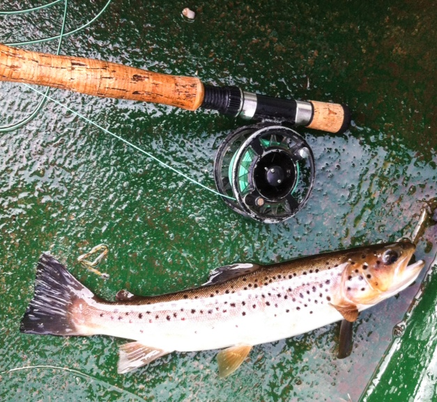 leesfish