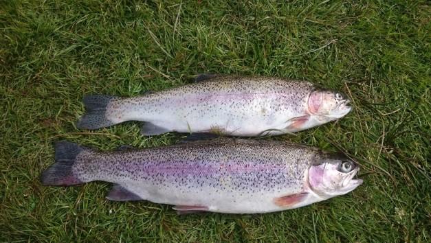 miller fish 1